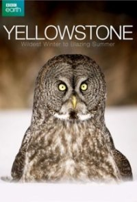 Cover der TV-Serie Yellowstone Nationalpark