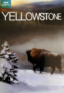 Yellowstone Nationalpark, Cover, HD, Serien Stream, ganze Folge